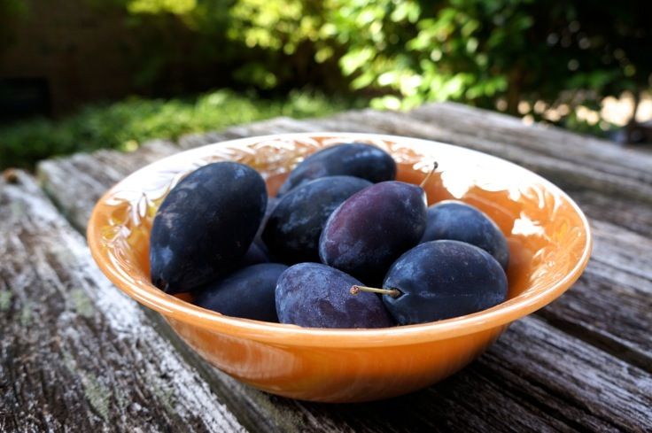 Italian prune plums from http://www.pleasepassthepeas.com